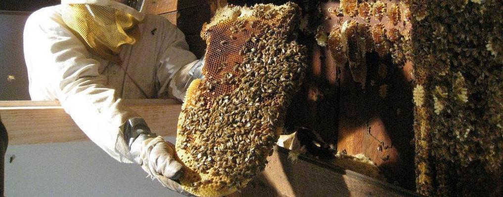 Уничтожение пчел